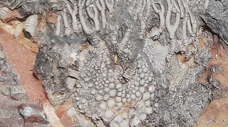 Fossils snail and plants
