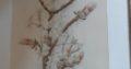 Floral drawings or paintings